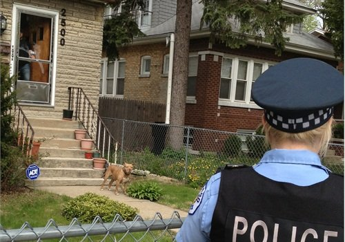 This dog is behind a fence, which is good. Now to keep it safe, the owner should call it into the house until the officer has left. (Photo: National Canine Research Council)