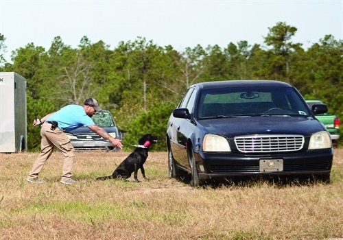 Person-Borne Explosive Detection Dogs can find planted explosives or follow a bomber walking through a crowd. (Photo: K2 Solutions)