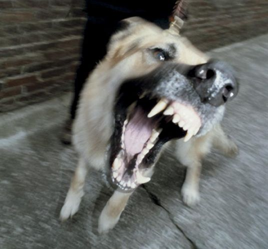 Countering Canine Attacks