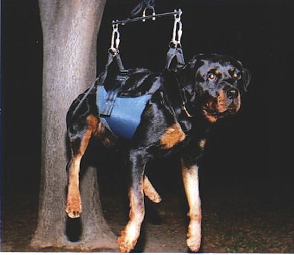 Equipping Your K-9