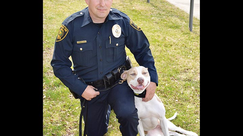 Shelter Dogs: From the Dog Pound to K-9 Duty