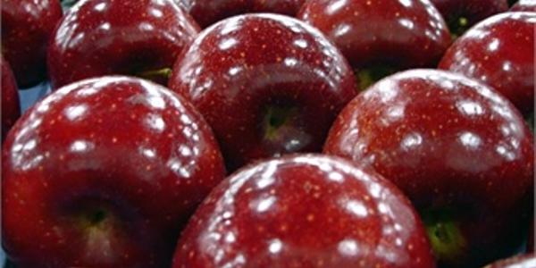 Quercetin is a potent antioxidant found in the skin of apples. Photo: Flickr (bunchofpants).