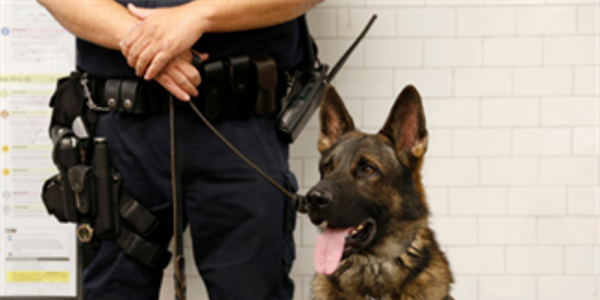 How Police Agencies Can Help Prevent K-9 Duty Deaths