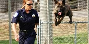 5 Tips for Joining a K-9 Unit