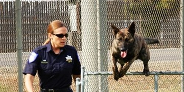 Officer Linda Matthew is the Sacramento (Calif.) Police Department's first female K-9 handler....