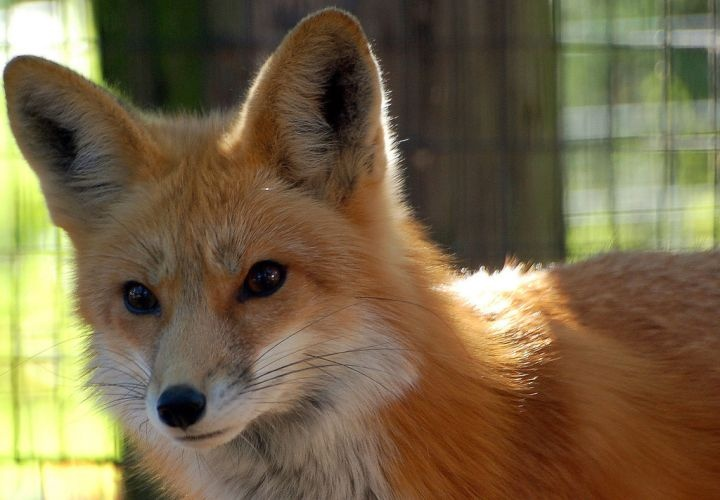Criminal Cops: Foxes in the Chicken Coop?