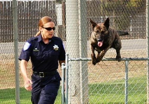 Officer Linda Matthew is the Sacramento (Calif.) Police Department's first female K-9 handler. Photo: Sacramento (Calif.) PD