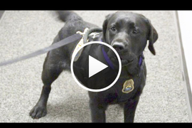 Video: U.S. Fish & Wildlife's K-9 Detectors