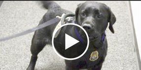 Video: U.S. Fish & Wildlife's K-9 Detectors