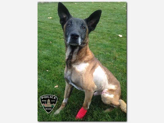 Boise K-9 Dies from Wounds Suffered in Last Week's Shooting