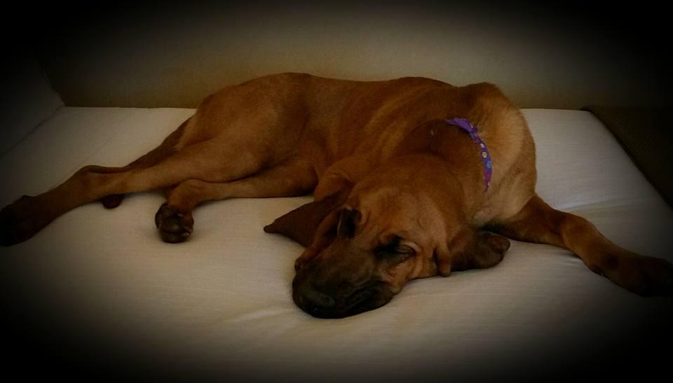 Spokane Police Training Bloodhound to Find Lost Children
