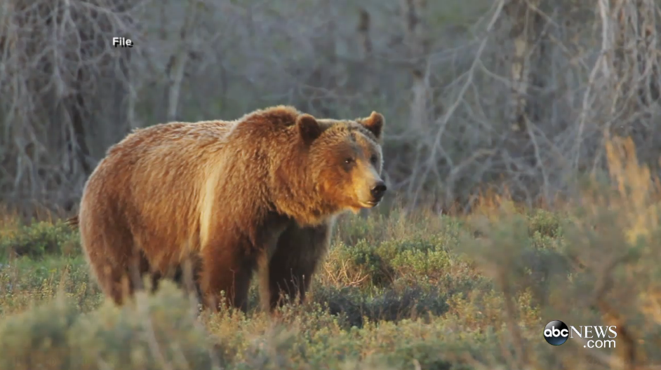 Video: Off-Duty Officer Killed by Grizzly Bear in Montana
