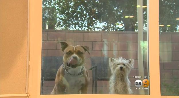 Video: Family Dog Helps LAPD Capture Pursuit Suspect