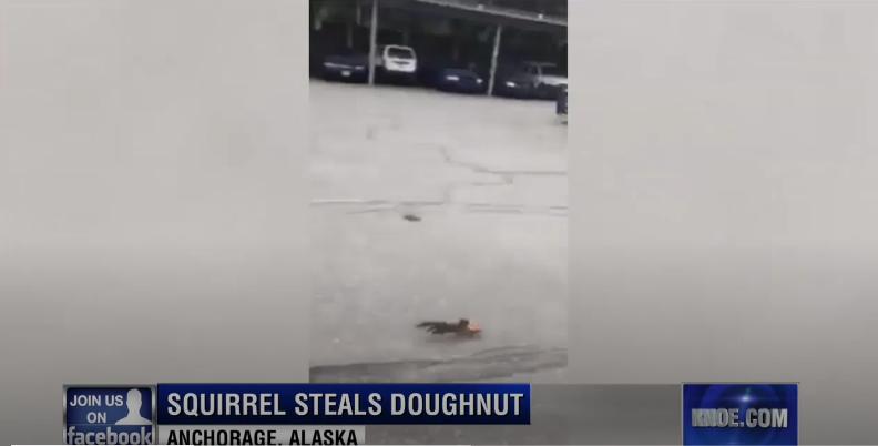 Video: Squirrel Steals Donut from Alaskan Officer