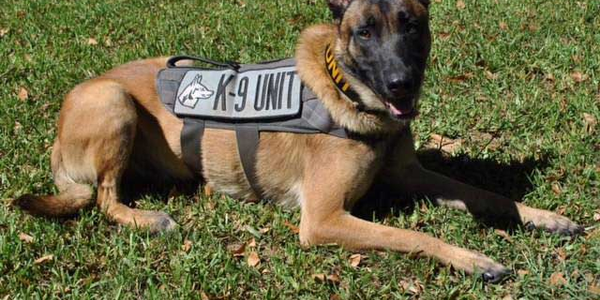 Smith County (TX) Deputy Constable K-9 Ogar (Photo: Facebook)