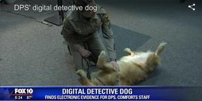 Video: Golden Retriever Joins Arizona DPS to Find Hidden Data, Help Distressed Employees