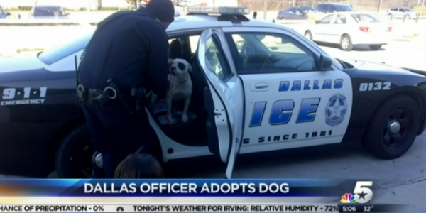 Video: Dallas Officer Adopts Dog He Rescued from Highway