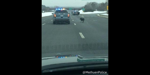 Massachusetts Officers Rescue Dog from Busy Highway