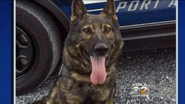 Video: Pennsylvania K-9 Fatally Stabbed, Suspect Shot and Killed