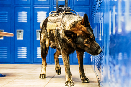 Some Agencies Fitting K-9s with Cameras