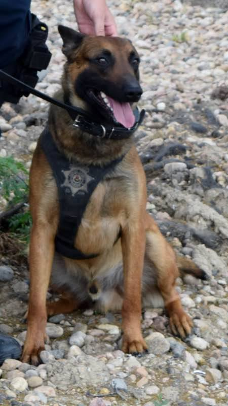 Colorado Sheriff's K-9 Opens Gate with Paw to Help Handler in Fight