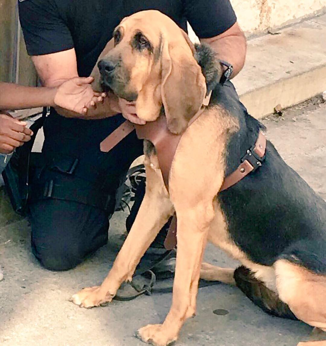 LAPD K-9 Locates Missing 9-Year-Old Girl