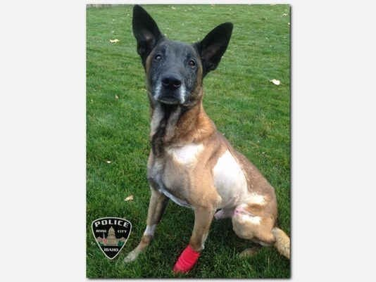 Boise PD K-9 Jardo died Wednesday from wounds he suffered in a shooting last Friday. (Photo: Boise PD)