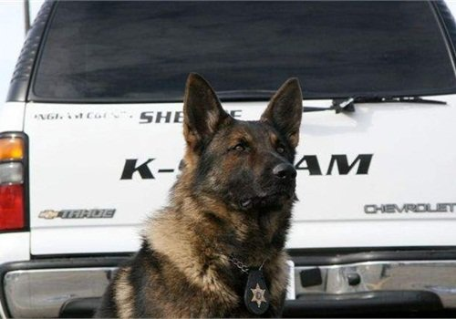 Photo courtesy of the Ingham County (Mich.) Sheriff's Office