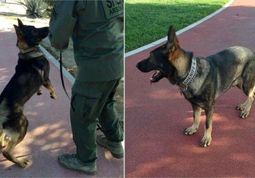 Jojo on duty. (Photo; Facebook)