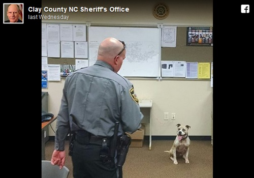 K-9 Sarah with her handler Deputy Harper. (Photo: Clay County Sheriff Facebook)