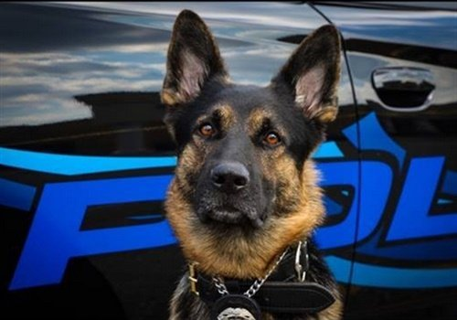 K-9 Axe (Photo: St. Clair Shores PD)