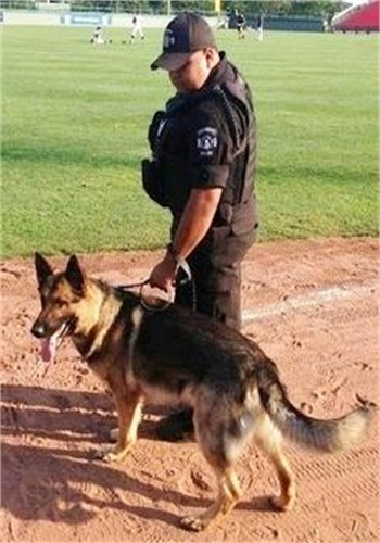Holbrook police dog Bo with his handler and partner, officer Joshua Knowlton. (Photo: Holbrook PD)