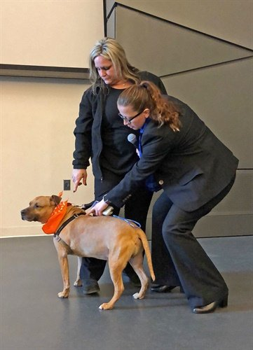 Sergeant Kathleen Russell of the NYPD Patrol Services Bureau demonstrates how to use a microchip scanner on adoptable dog, Orson, during an all-day Animal Cruelty Investigations Seminar at the NYPD Police Academy on Saturday, February 10, 2018. (Photo: ASPCA)