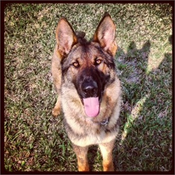 St. Johns County Sheriff's deputies believe their K-9 Baron was drowned by a suspect.