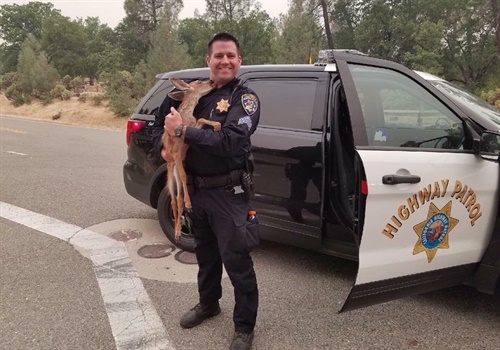 The California Highway Patrol in Redding posted to its Facebook page a message showing images of CHP San Francisco Sergeant Fawson receiving a wet kiss from the one-month old fawn he rescued from a wildfire. Image courtesy of CHP Redding / Facebook.