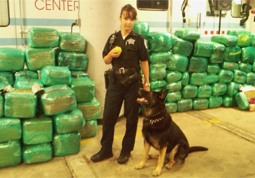 One of the Chicago PD's K-9 officers who was involved in a $33 million narcotics bust. Photo: Chicago PD.