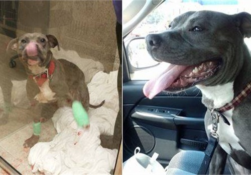 This photo from the Cleveland Police Facebook page shows Harvard the dog on the day he was rescued (left) and on the day he was released from the animal hospital.