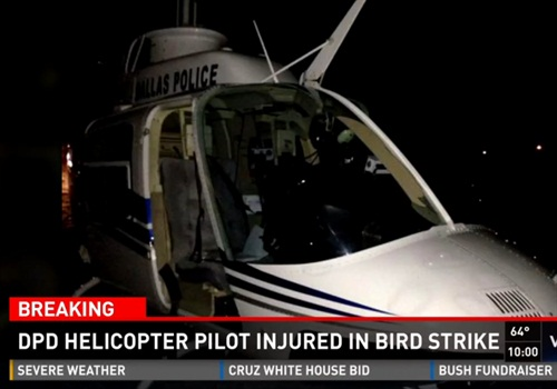 A Dallas Police Department helicopter was forced to land after a bird strike. (Photo: Screen shot from WFAA TV)