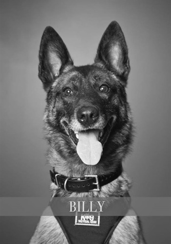 K-9 Billy (Photo: Hillsboro PD)