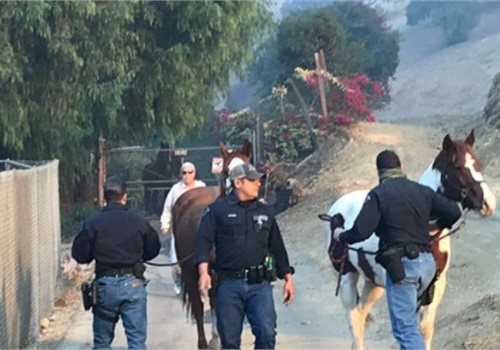 LAPD equestrian officers rescue a horse from the Creek Fire. (Photo: Gary Copeland/LAPD)