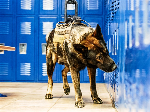 Tactical Electronics Core K9 Camera system sends video back to the handler. A push-to-talk feature lets the handler give commands to the dog or the suspect. (Photo: Tactical Electronics)