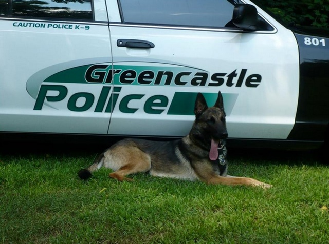 Greencastle (PA) Police Department K-9 Rony was struck by a vehicle and killed Wednesday. (Photo: Greencastle PD)