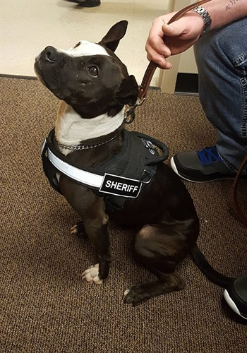 K-9 Phantom was rescued from an animal shelter. (Photo: Clay County Sheriff Facebook)