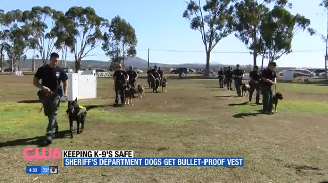 All San Diego County Sheriff's K-9s have now been outfitted with body armor. (Photo: CW6 Screen shot)