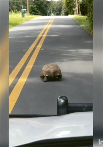 "In a video rant posted to Facebook, Marion County (FL) Sheriff's Deputy Bryan Bowman mocks a turtle for ""going one mile per hour in a 30-mile-per-hour zone."" Image courtesy of Marion County (FL) Sheriff's Office / Facebook."
