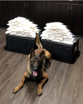 West Covina, CA, K-9 Rye made a huge score his first day on the job. (Photo: West Covina PD)