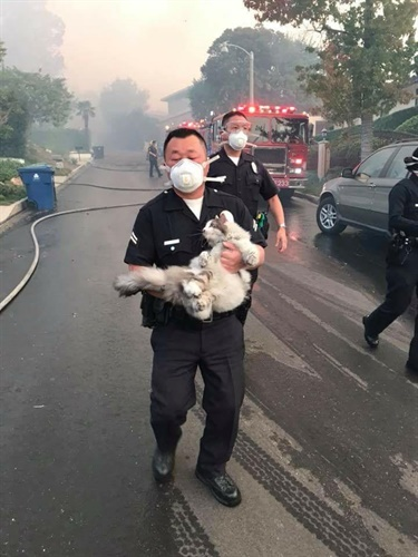 LAPD Officer Tae Kim rescues a cat in Bel-Air. The cat was reunited with its owner. (Photo: Tim Colson/LAPD)