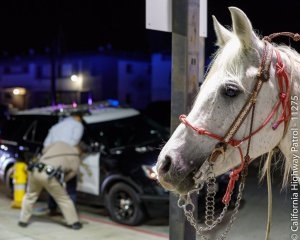 A man was arrested by a California Highway Patrol officer on suspicion of DUI after he was spotted riding a horse on a Los Angeles-area freeway. (Photo: California Highway Patrol)