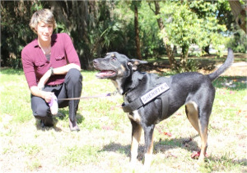 Shelter dog GIA is now an electronics finding K-9 for theManatee County (FL) Sheriff's Office. (Photo: Bishop Animal Shelter)