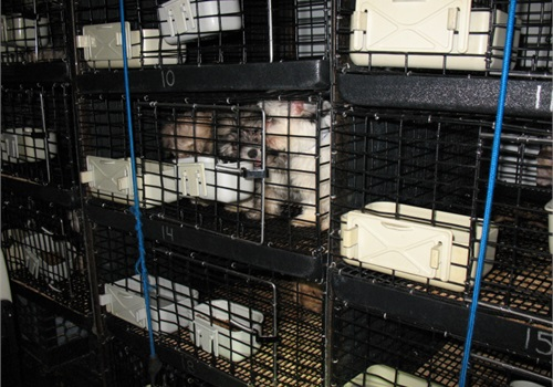 Paramus (NJ) Police found 67 puppies caged inside a poorly heated and poorly ventilated van outside a closed pet store. (Photo: Paramus PD)